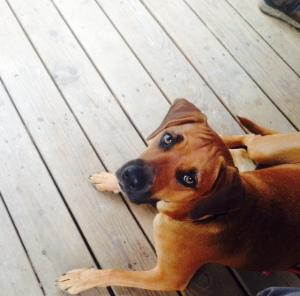 Meander, the porch dog.